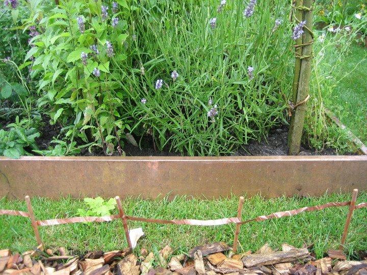 Tatton Show garden - Purple Sue