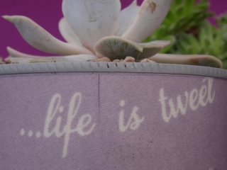 Life is tweet - upcycled product by Purple Sue
